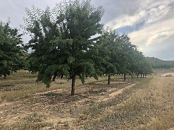 amandel trees Ceitón visvakanties off grid huisje huren
